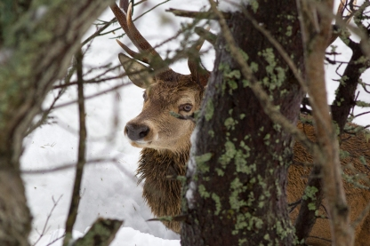cervol 3